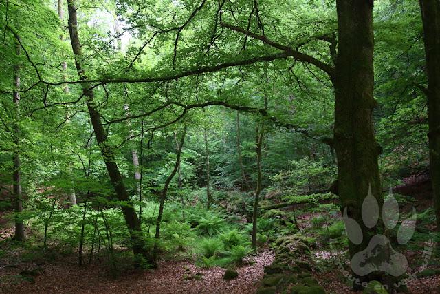 Suede-Scanie-parc-national-soderasens-foret-rostanga
