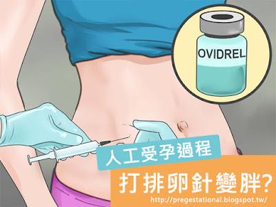 打排卵針會變胖嗎