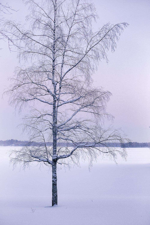 Espoo, Suomi, Finland, experience finland, discover finland, talvi, winter, january, tammikuu, valokuvaaja, Frida Steiner, Visualaddict, visualaddictfrida, tree, puu, nature, luonto, luontokuva, naturephotography, chill, frost, ranta, beach