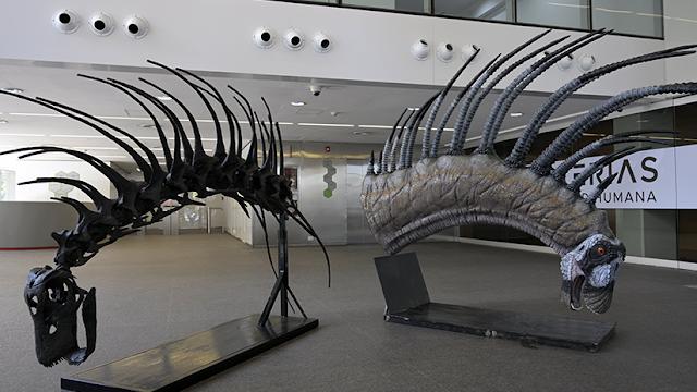 Hallan en Argentina una nueva especie de dinosaurio que se defendía con afiladas espinas en su cuello