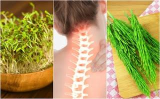 7 plantes médicinales qui vous aident à prendre soin de la santé osseuse