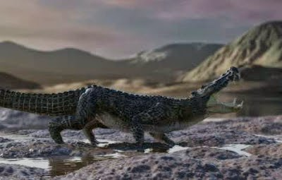 boar croc