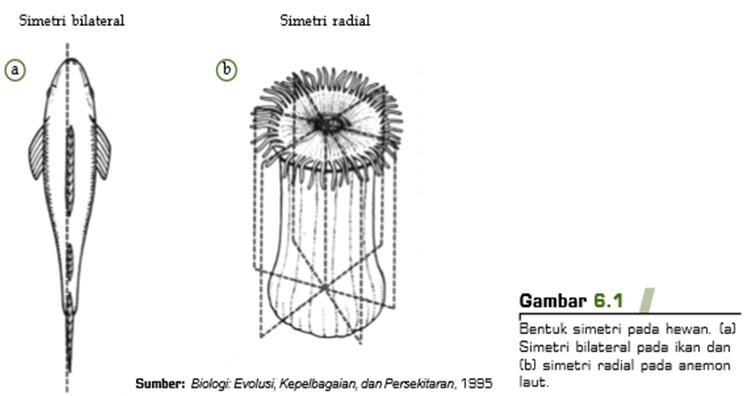 680 Koleksi Gambar Hewan Yang Memiliki Bentuk Tubuh Simetri Radial Adalah Terbaik