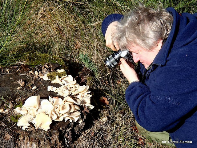 pyza fotografuje grzyby, grzyby gatunkami, zdjęcia grzybow, olympus, grzybobranie, ponidzie