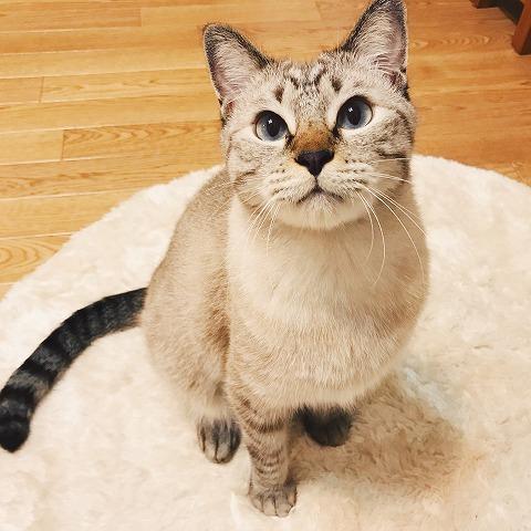 猫が遊んでほしそうな眼差しでこっちを見ている