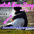 Santali New Love Sad Song 2017 Free Download [Top 25Th]