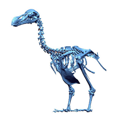 The first 3-D atlas of the extinct dodo