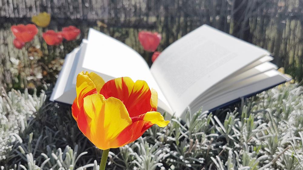 Offenes Buch im Blumenbeet