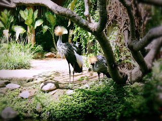 Birds With Long Legs Grey Crowned Crane at Garden Animals Gianyar Bali
