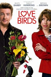 Poster Love Birds