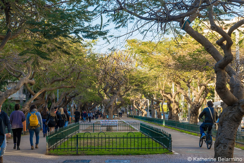 Rothschild Boulevard Things to Do One Day in Tel Aviv