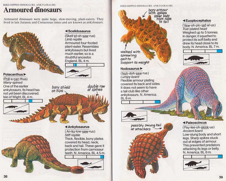 Animal Encyclopedia Book For Kids