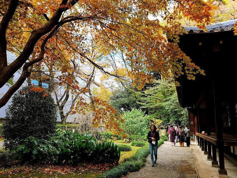 東京博物館內的庭園,喜歡這裡的秋色