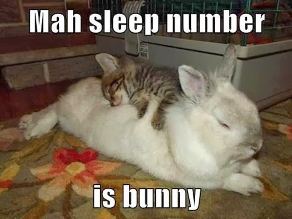 Kitten sleeping on top of rabbit - 20 funny animals in this gallery.