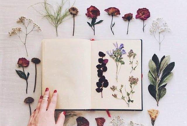 Objevte vůně naší malé botanické zahrady!