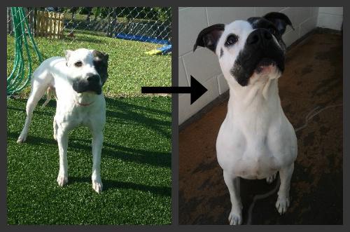 The Shelter Girl: Asima and Dog Behavior
