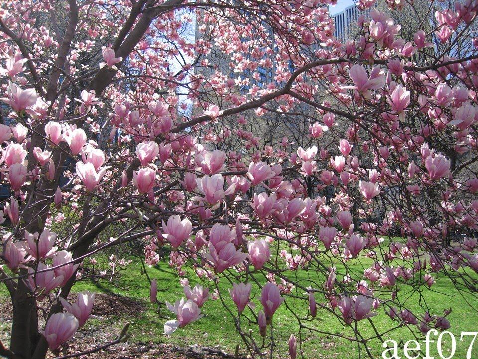 Foto per desktop primavera for Immagini desktop primavera