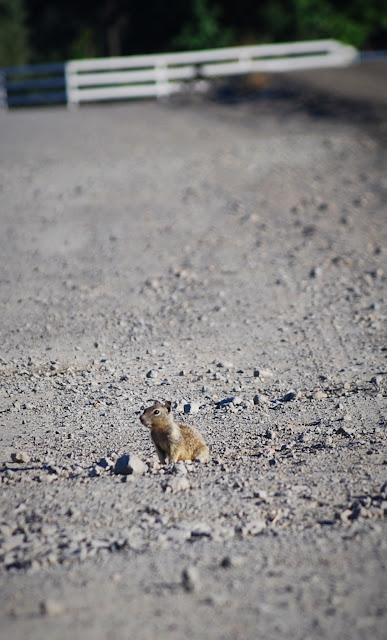 Burrow Blocker Ground Squirrel Control - Green & Organic