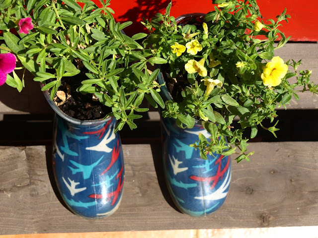 diy-λουλούδια-σε-παλιά-παπούτσια