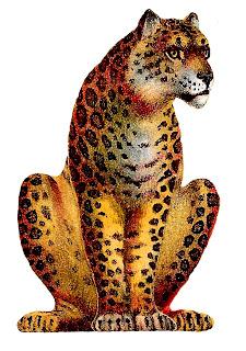leopard big cat image transfer clipart illustration animal download