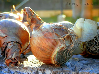 Consejos par plantar y guardar bulbos