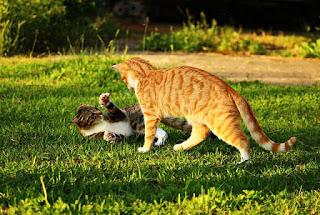 Cat Habit