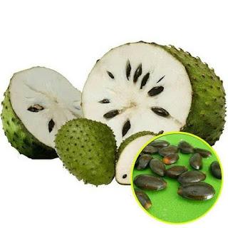 Manfaat dari Annona muricata obat awet muda -www.berbagaimanfaat.me