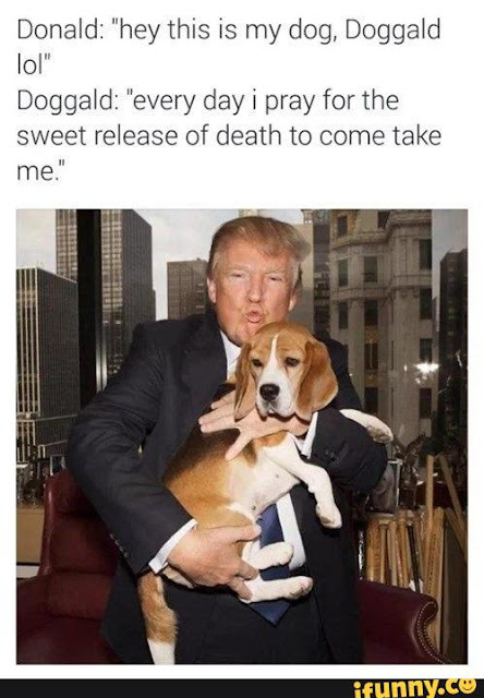 Big List Of Hilarious Donald Trump Memes Vibe Best