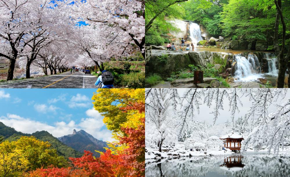 Empat Musim Di Korea Selatan Ketahuilah Dulu Sebelum Berkunjung Kesana