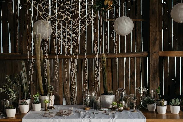 Kaktusy, jako ozdoba na ślubnym plenerze.