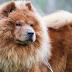 Top 10 Beautiful & Cute Dog Breeds