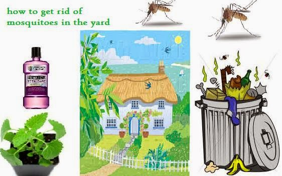 How to get rid of Mosquitoes: HOW TO RID YOUR YARD OF ...