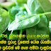 If you used to eat spinach many diseases Coping can be informed about the course