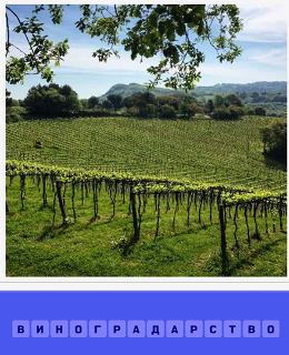 большие плантации на склоне виноградарство