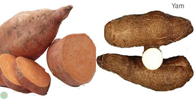yam; yam vegetable