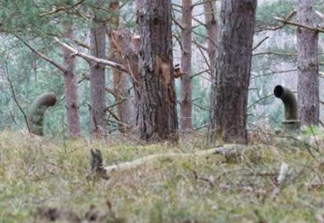 Temukan Pipa Misterius di Hutan, Saat Ditelusuri Hingga Ujung Bikin Terkejut!