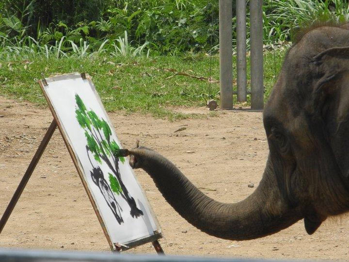 Elefant Malt Elefant