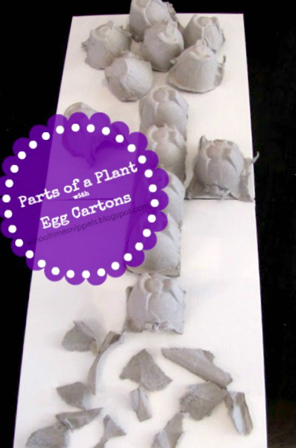 parts of a plant activity for kids