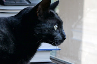 Doctor Pyewacket, the cat, looking intently out a window