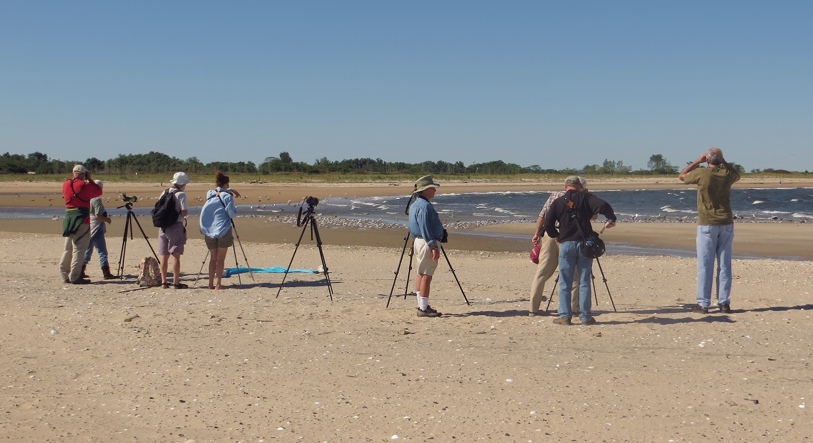 Birders Flock to Sandy Hook for Rare Bird | Nature on the
