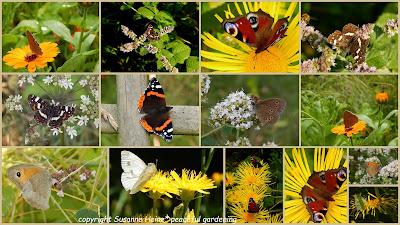 Schmetterlinge in meinem bioveganen Garten