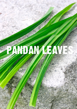 what are pandan leaves?