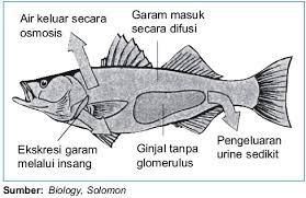 sistem ekskresi pada hewan