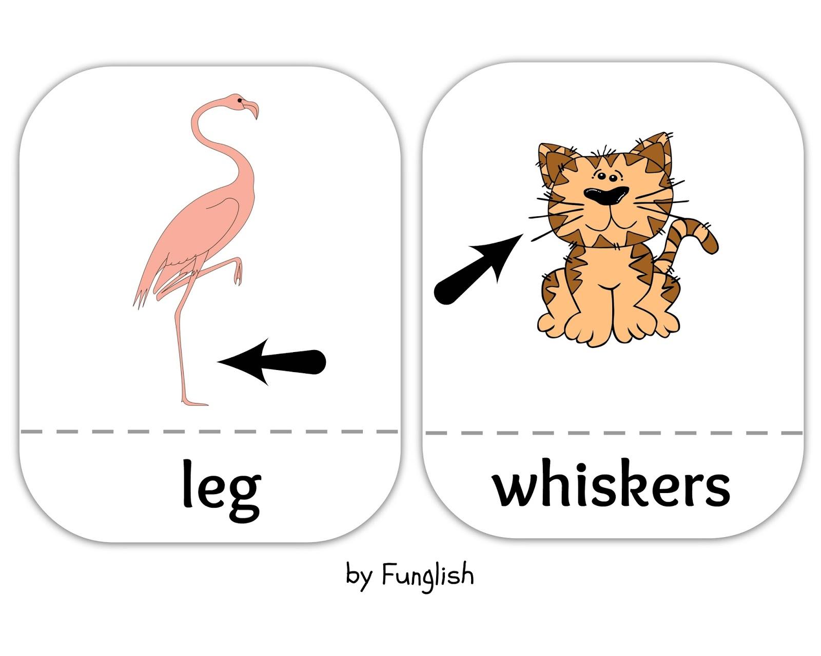 Funglish Animal Body Parts