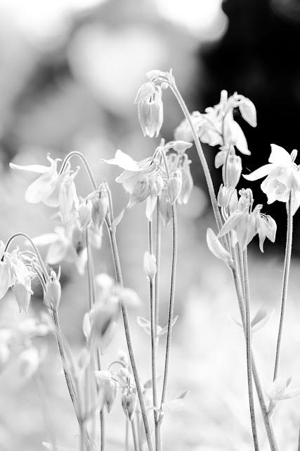 Monochrome Photografie,Schwarz Weiß Fotografie
