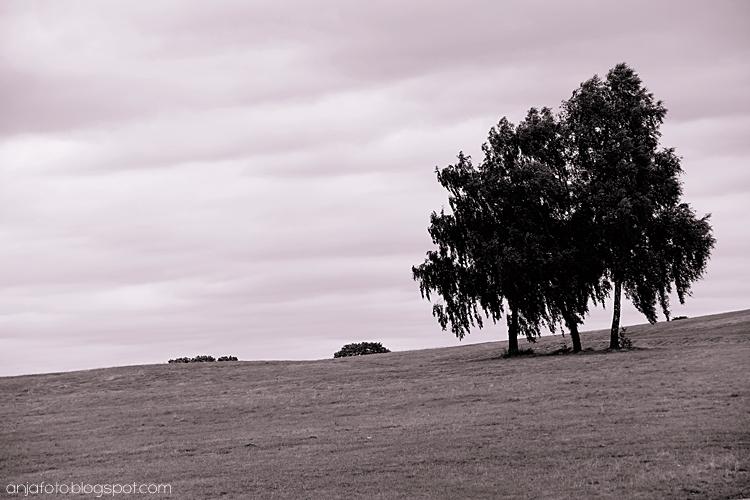 minimalizm, fotografia minimalistyczna, fotografia czarno czarno biała, black and white, black and white photography, minimalistic photography, samotne drzewo