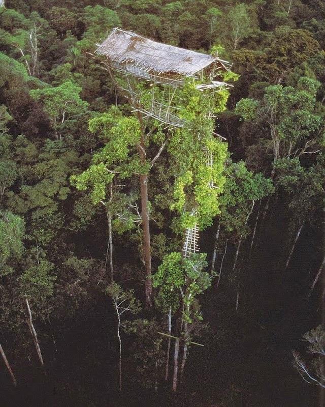 casa en el árbol de gran altura vista desde el aire
