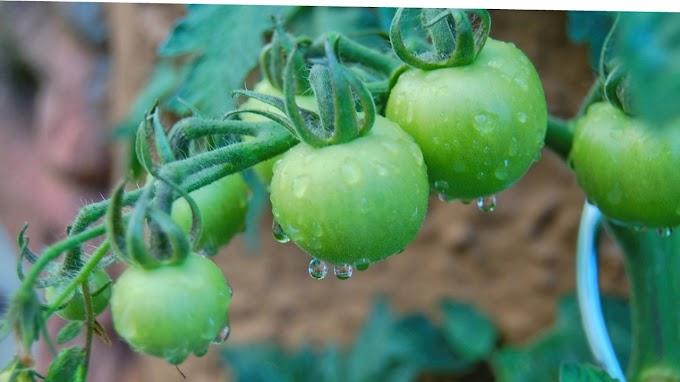 Pumpkin benefits  for health.Top 7 various informations.