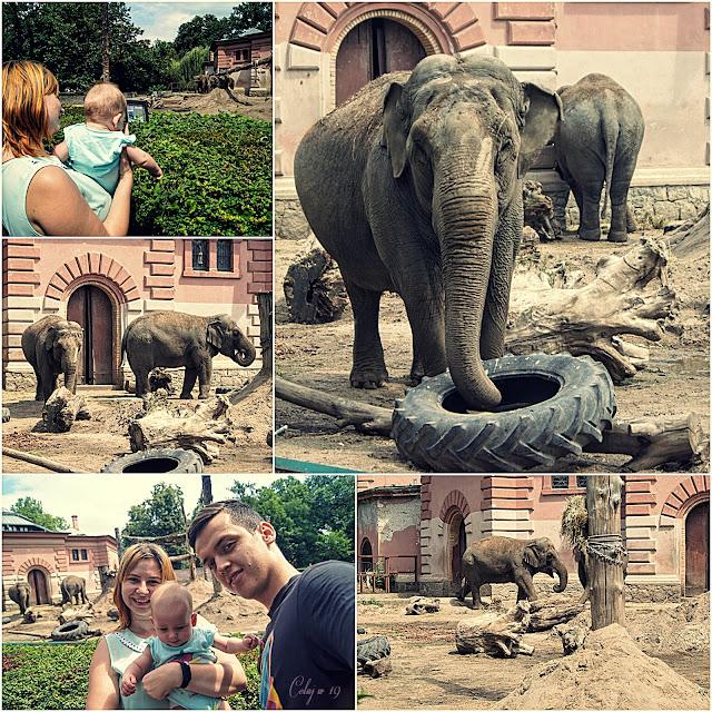 Kolaż zdjęć [ja, Weronika, Marcin i słonie]