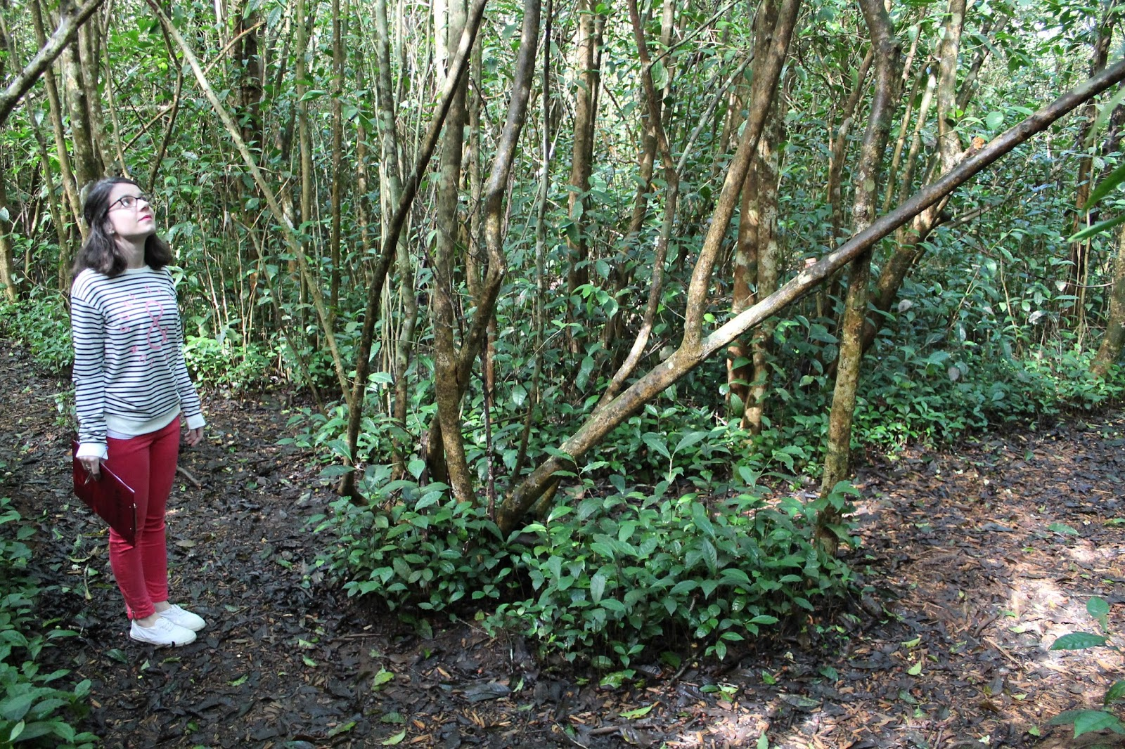 réunion île gotoreunion labyrinthe en champ thé tea grand coude visite à faire jumbocar irt tourisme 974 kiabi haul soldes bensimon